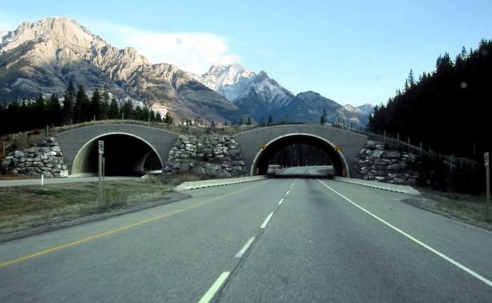 Топ-15 секретов Канады, о которых вы не подозревали