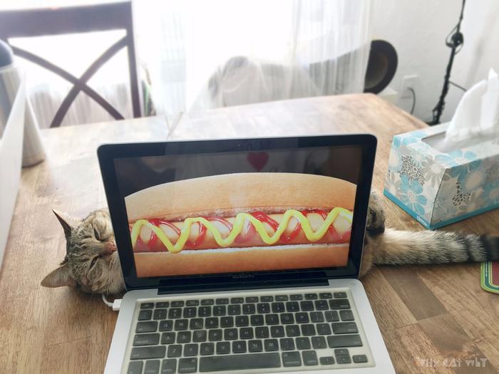 прикольные фото кошек 1 (700x525, 367Kb)