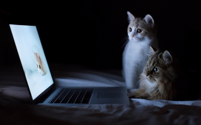 www.GetBg.net_Animals___Cats_Two_cats_and_a_laptop_046868_ (700x437, 189Kb)
