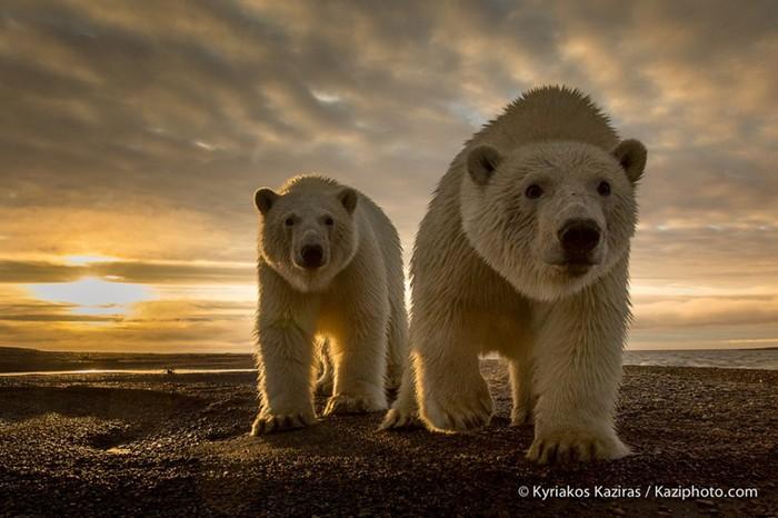 10 талантливых фотографов дикой природы и их потрясающие фотографии животных