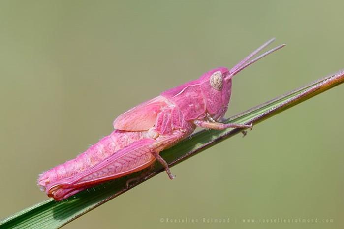Неожиданно яркие животные с разноцветной расцветкой   очень красиво!