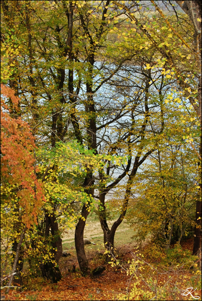 autumn_in_Baydar_Valley_2016_004 (402x600, 465Kb)