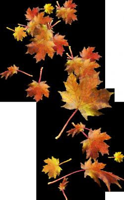 5239708-thumb (250x403, 127Kb)