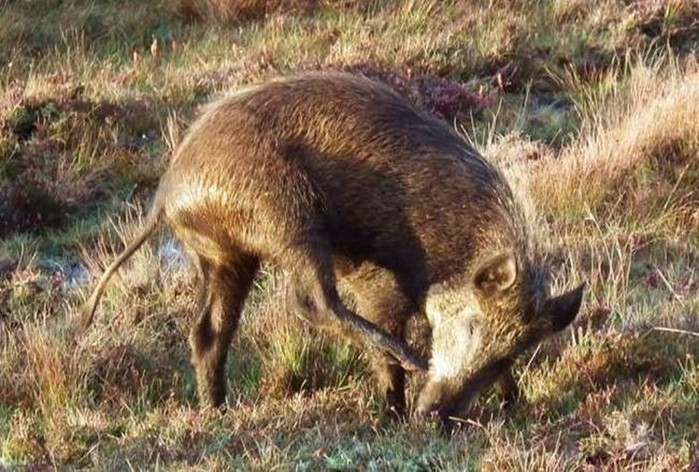 Кроточерви и оленемыши   20 странных животных, скрещенных непонятно с кем