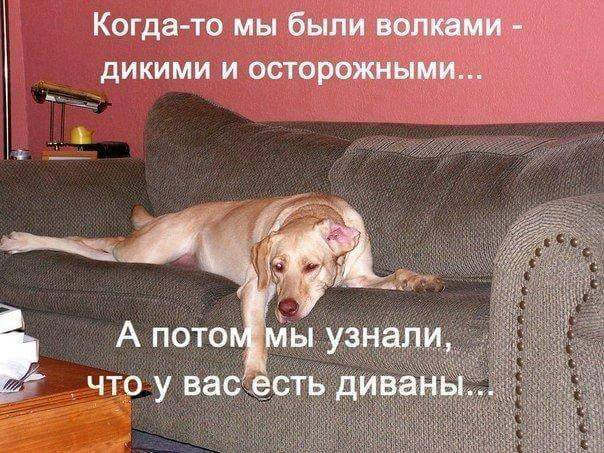 FB_IMG_1477515515987 (604x453, 64Kb)