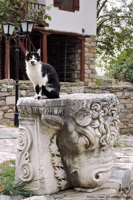 Shraddha_trаvel Турция 2016 (88) (466x700, 365Kb)