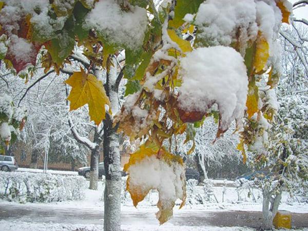 зима (600x450, 309Kb)