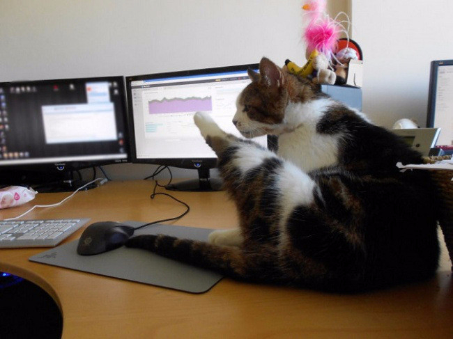 кошки в офисе 2 (650x487, 226Kb)