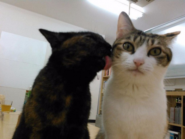 кошки в офисе 6 (650x487, 194Kb)