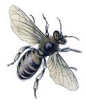 Превью bee botanical vintage Image GraphicsFairy7 (331x400, 105Kb)