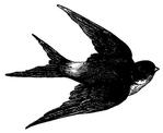 Превью swallow bird vintage image graphicsfairyblk (400x327, 48Kb)
