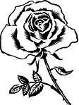 Превью rose_sketch (240x320, 29Kb)