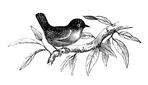 Превью spring-bird-Vintage-Image-GraphicsFairy (700x400, 88Kb)
