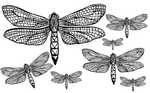 Превью 85064353_large_1278471016_55_FT838_winged_friends_dragonfly_ (365x227, 72Kb)