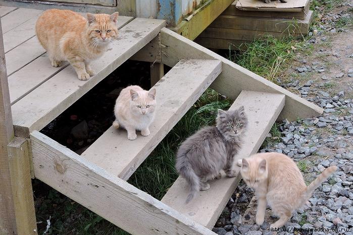 коты (1) (700x466, 351Kb)