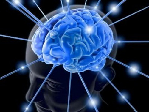 мозг (500x377, 57Kb)