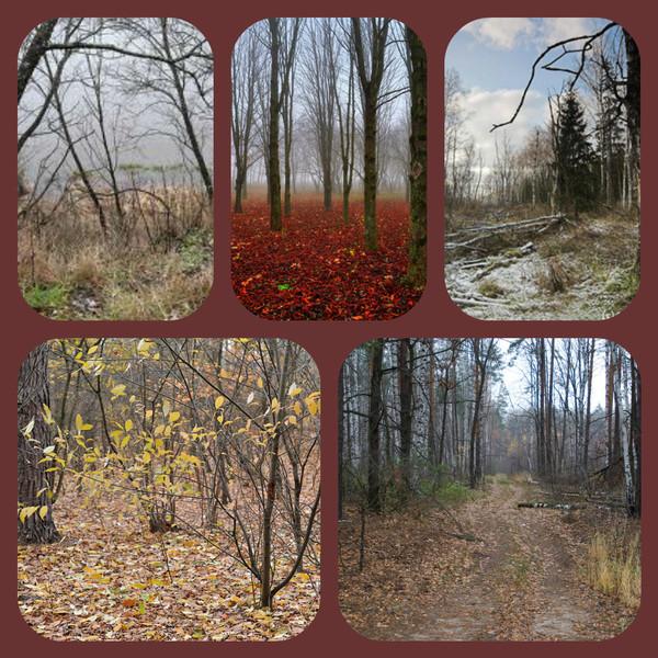 лес1 (600x600, 436Kb)