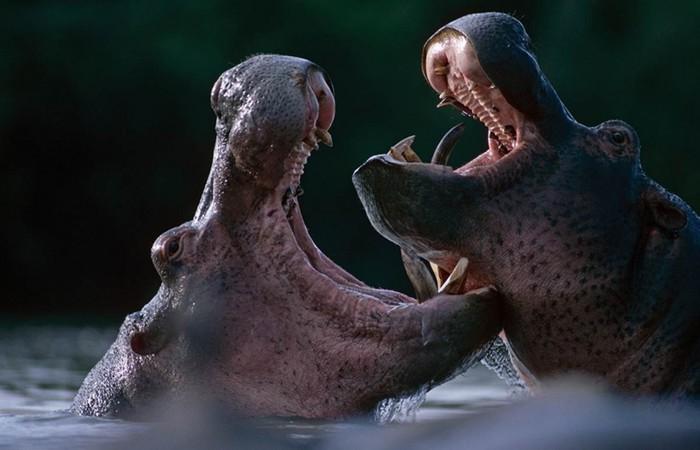 В мире животных   подборка фотографий, сделанных в зоопарках мира