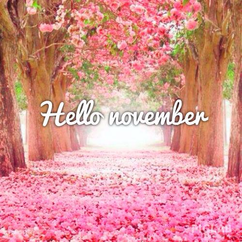 211260-Pretty-Hello-November-Quote (500x500, 317Kb)
