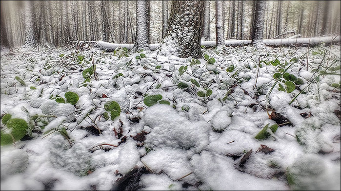 Под снежным одеялом/3673959_7 (700x393, 126Kb)