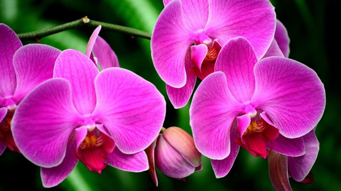 orchid_flower_branch_exotic_55983_3840x2160 (700x392, 69Kb)