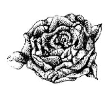 Captura de Tela (476) (220x208, 32Kb)