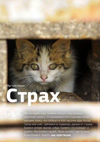 01_Cat (427x604, 37Kb)