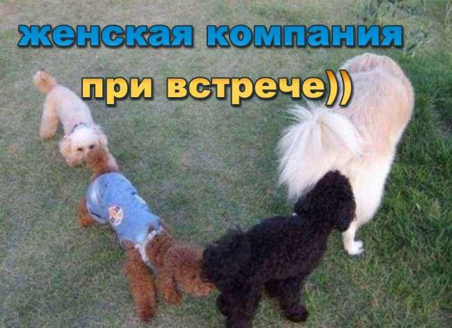 5939244_pochemusobakinyuhayutdrugdruga_1 (650x473, 43Kb)