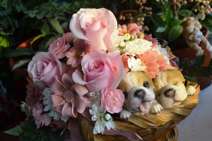 Цветы самые лучшие