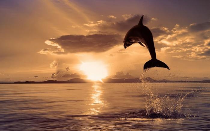Животное дельфин: самые интересные факты о сне, разуме, языке дельфинов и другом