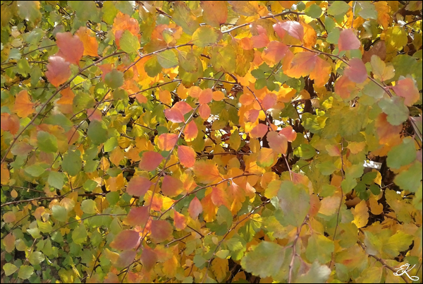 Autumn_05 (600x402, 320Kb)