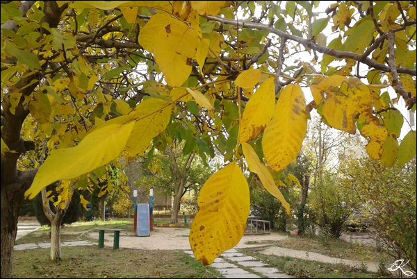 Autumn_07 (600x402, 334Kb)