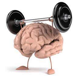 мозг (250x251, 7Kb)