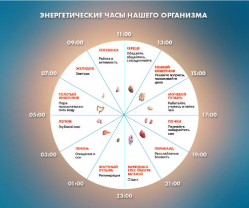 1478961130_biologicheskie_chasuy_organizma (503x420, 212Kb)