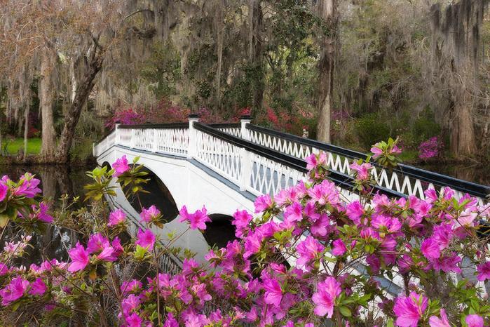 Charleston_2013Apr01_0392as (700x466, 280Kb)