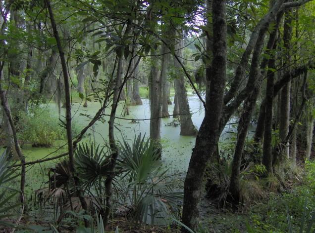 magnolia-plantation-audobon-swamp-sc1 (636x472, 123Kb)