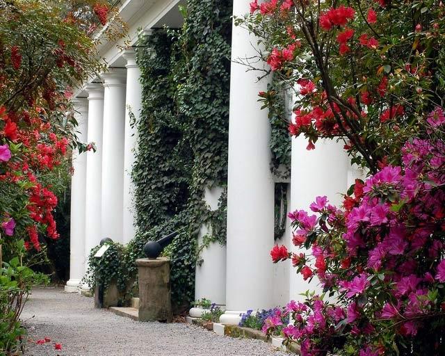 magnolia-gardens (640x512, 228Kb)