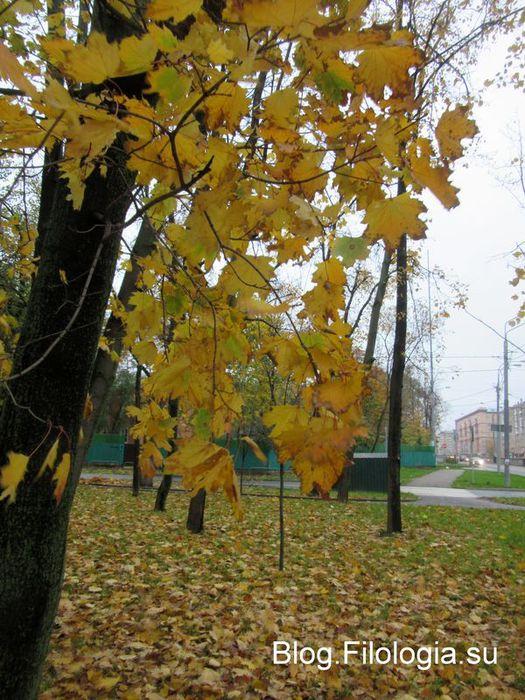 Осенние золотые листья