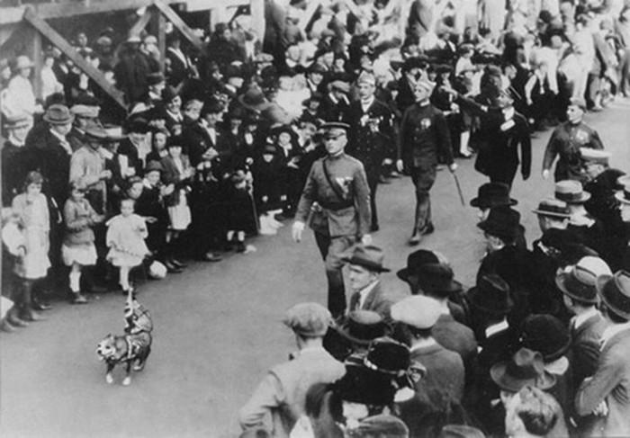 Сержант Стабби   героический пес Первой мировой войны