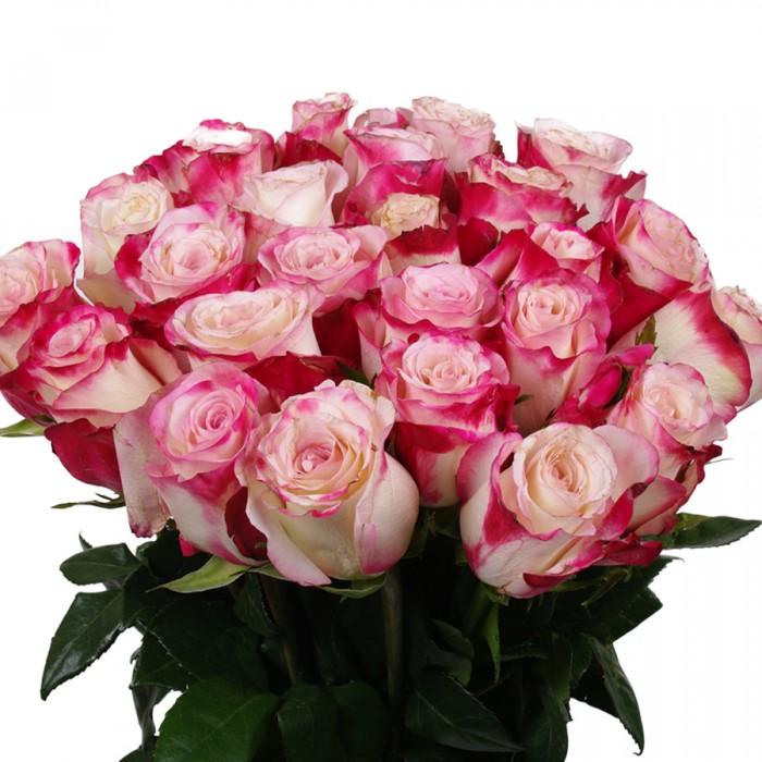 розы роз красн бел (700x700, 107Kb)