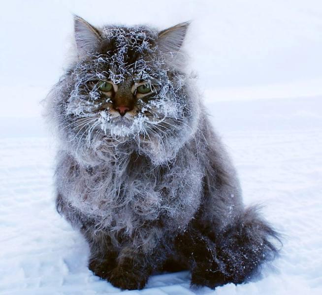 кот (654x600, 56Kb)