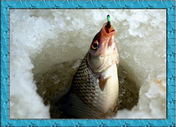 Салаты на зиму из баклажан рецепты с фото простые и вкусные рецепты фото