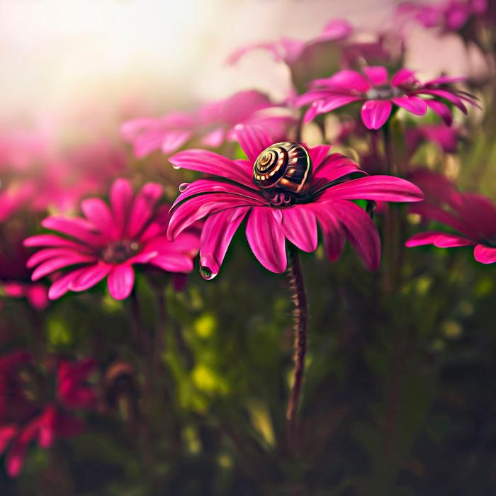 krasota-cvetov-7 (700x700, 418Kb)