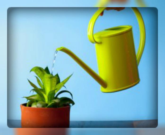 Чем поливать цветы в домашних условиях 48