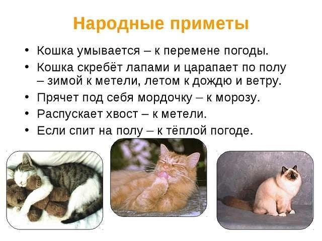 3925311_koshkini_primeti (640x480, 62Kb)
