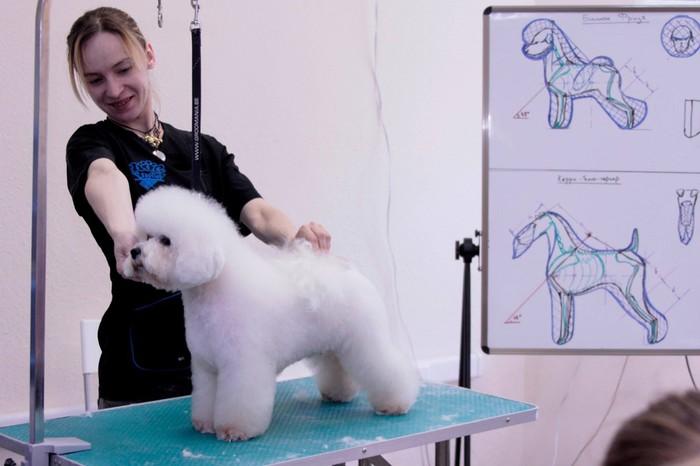 Очень маленькая порода собак Фризский бишон