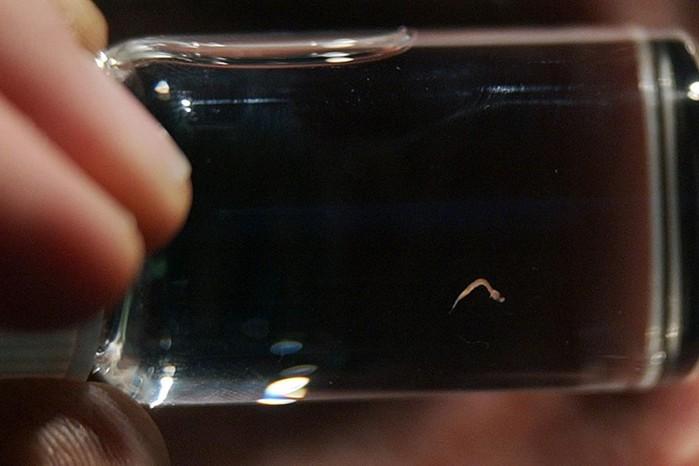 Самые маленькие животные в мире   фотографии удивительных созданий нашей планеты