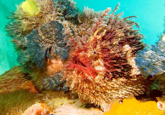 Камуфляж! 10 удивительных способов маскировки морских обитателей