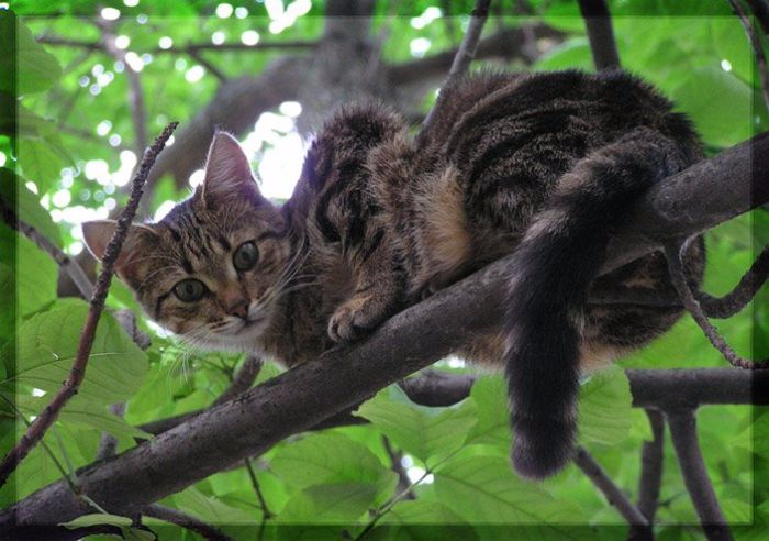 1311956749_cat_on_tree_18 (700x492, 297Kb)