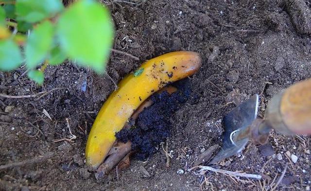 Банановая кожура_использование10 (640x393, 226Kb)